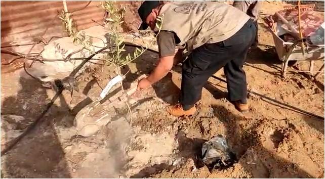 Wakaf Seribu Pohon Zaitun untuk Gaza Palestina